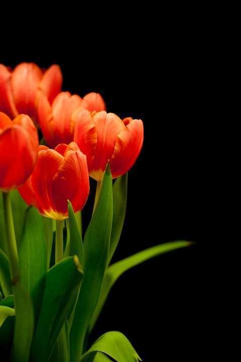 Un voyage Floral