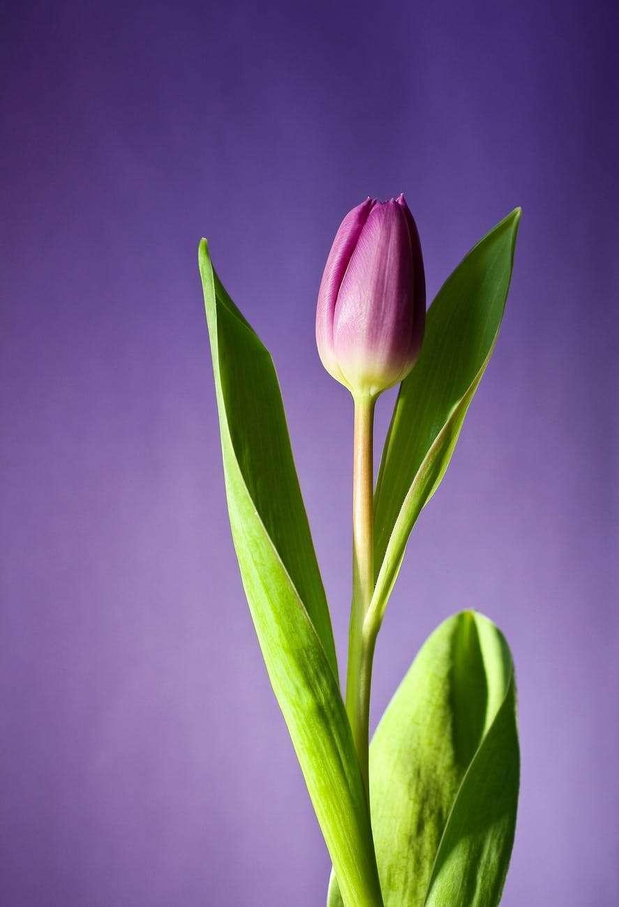 Enchanter une femme avec des fleurs