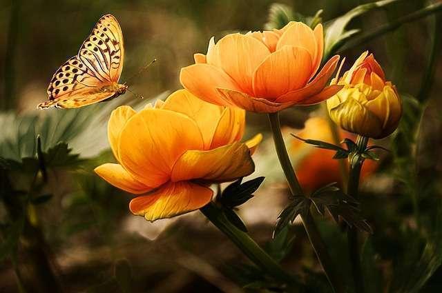 Les fleurs, remède contre le stress ?