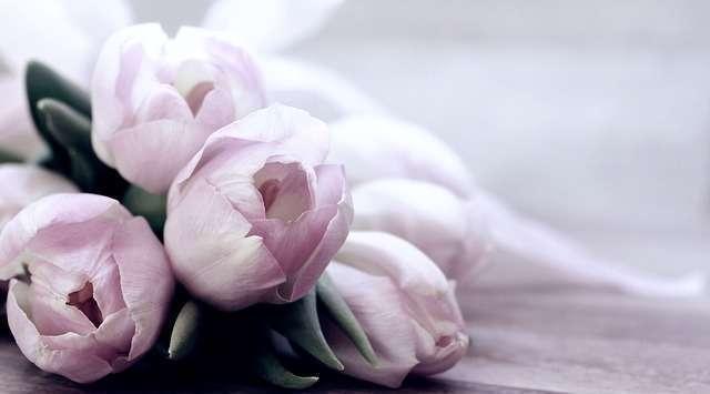 Fleur de la semaine : La Tulipe