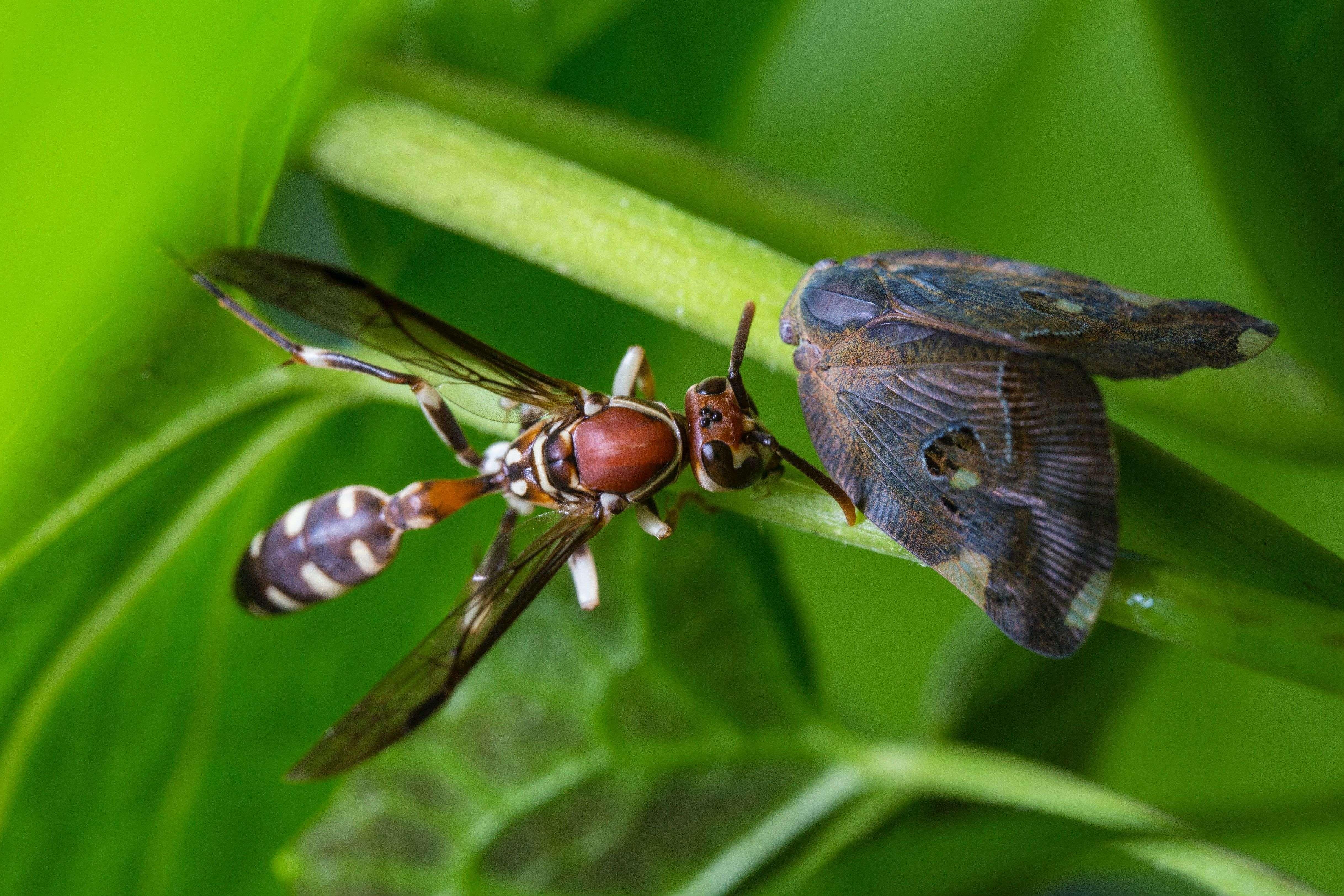 Désinsectisation : éliminer les insectes durablement