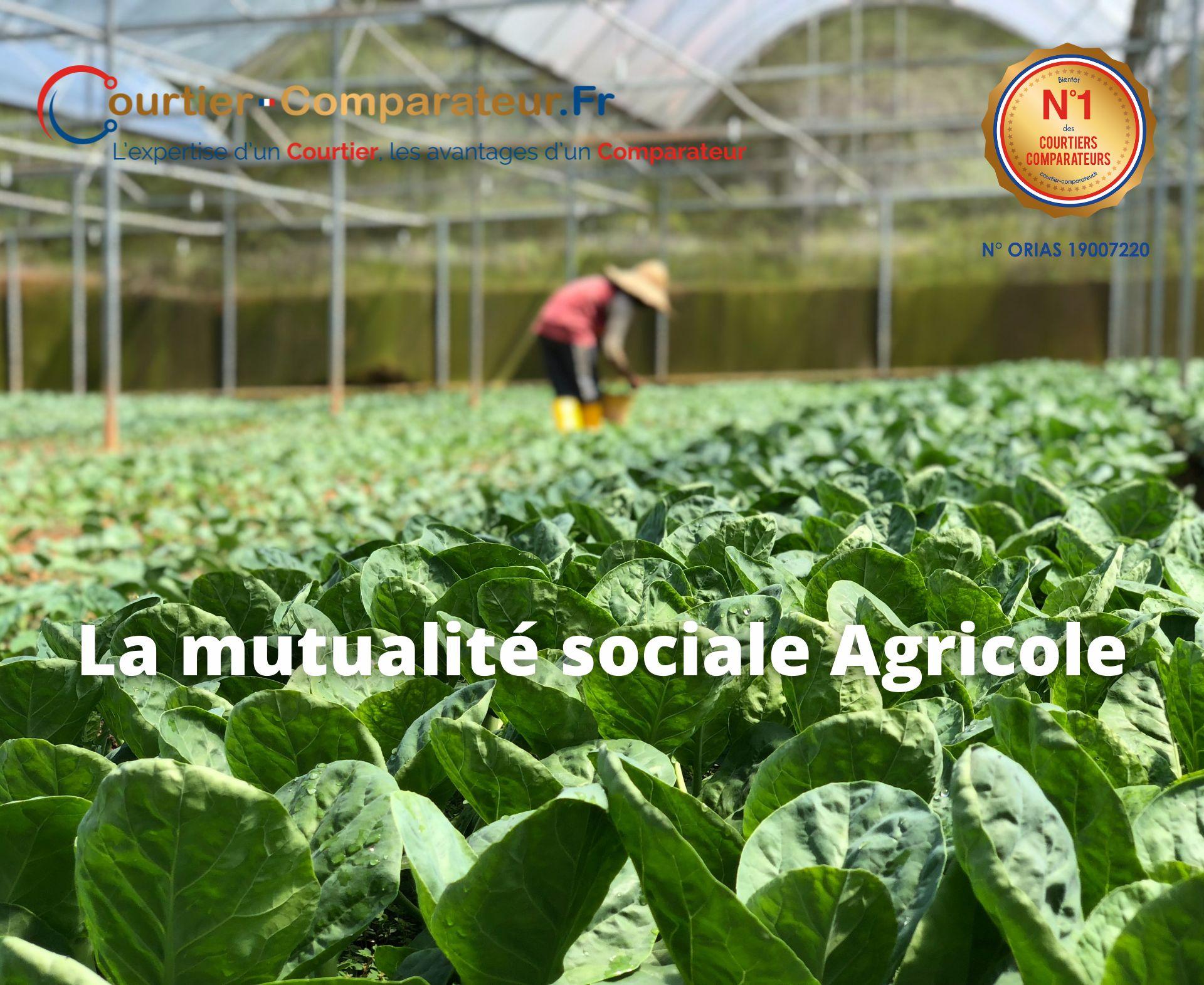 La Mutualité Sociale Agricole !