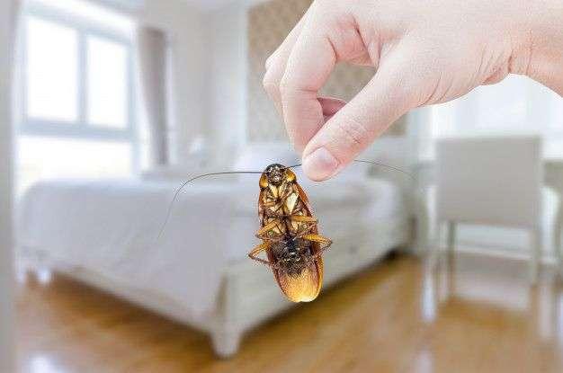 Les insectes rampants